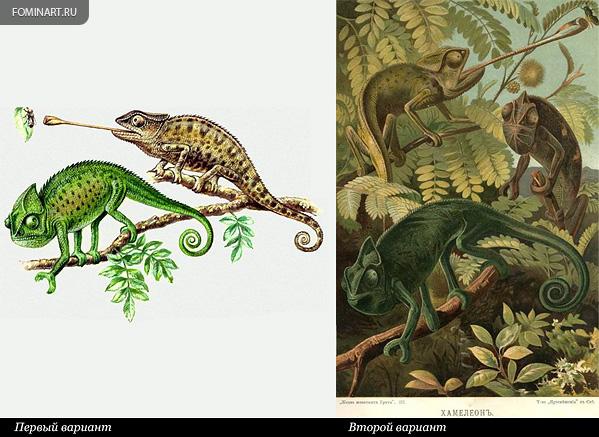 2 варианта «Обыкновенного хамелеона»