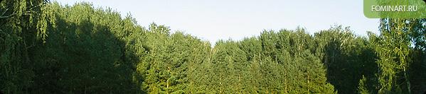 У лесного массива близ Краснозерска