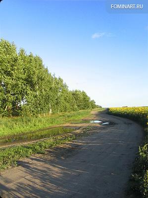 Дорога вдоль поля из подсолнухов
