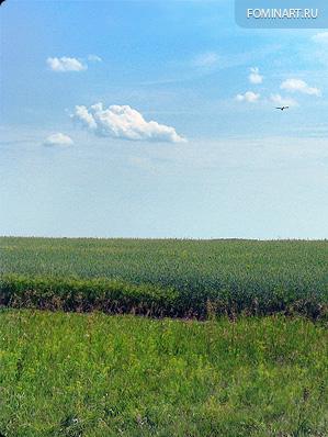 Проезжая пшеничное поле
